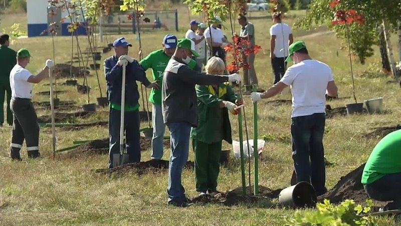В Губкине появилось новые зеленые зоны Акцию Сохраним лес поддержала компания Металлоинвест