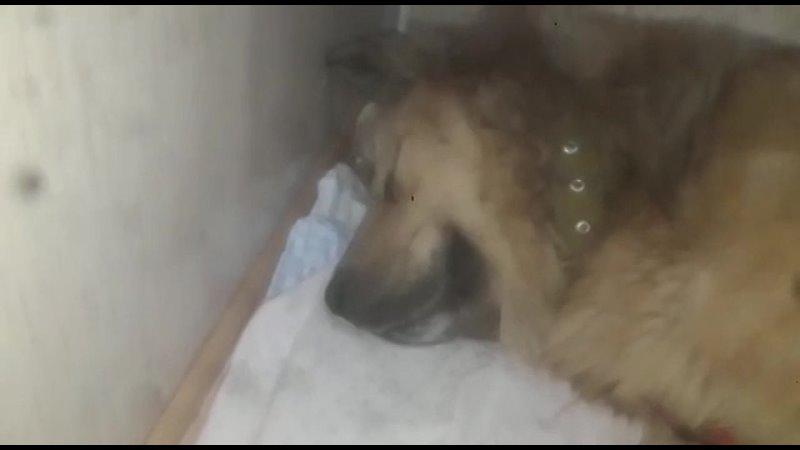 Видео от Собачье Сердце собаки и щенки ищут дом г Уфа