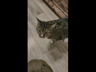 Кто потерял кота , поселок строительный ,донская у...
