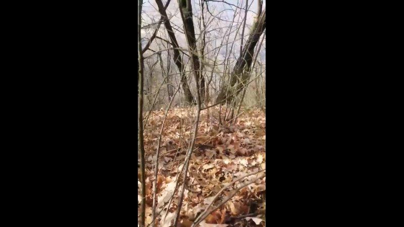 Видео от FAZI9