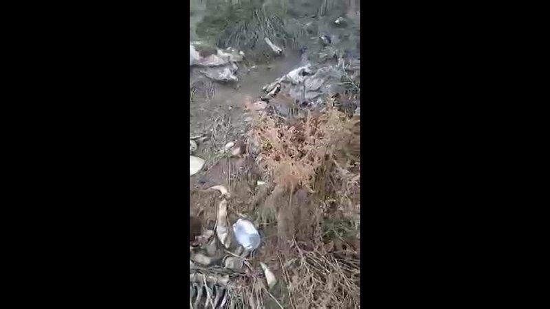 Видео от Хакасия LIVE