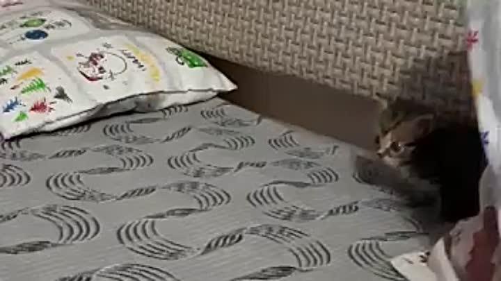 Видео от Животные Сухой Лог SpayDay