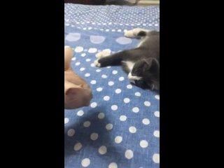 Видео от Happy Cat(Счастливый кот) г.Ухта