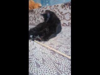 Vídeo de Natalia Udovenko