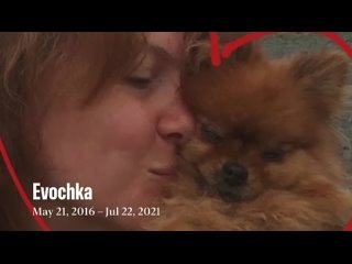 Video by Galina Razumova