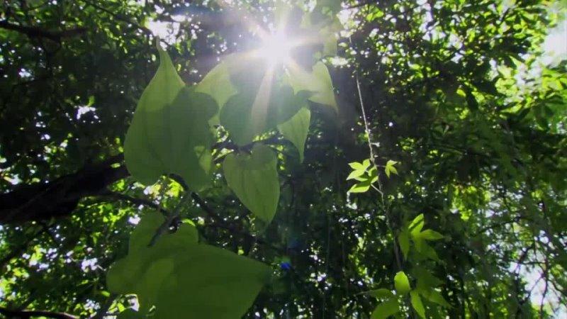 Амазонка В дебрях Латинской Америки
