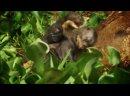 Амазонка плавающий лес Неизведанные острова Discovery Channel.mp4