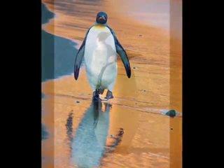 Забавные пингвины Антарктики - В-Антаркт...пингвинов (480p).mp4