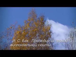 Александр Шилков. И.С.Бах на природе( Прелюдия из 1-й виолончельной сюиты)- 2