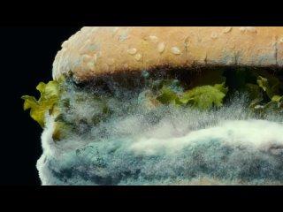Бургер с плесенью от Burger King