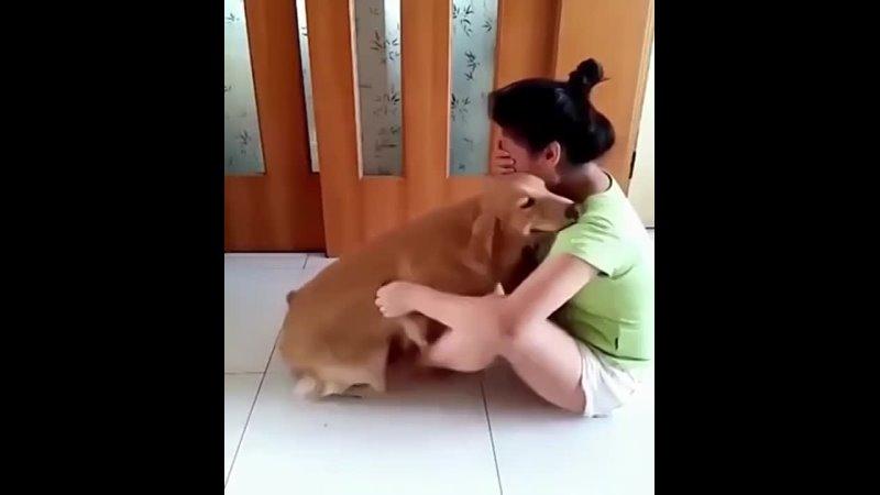 Как собака терапевт может помочь людям