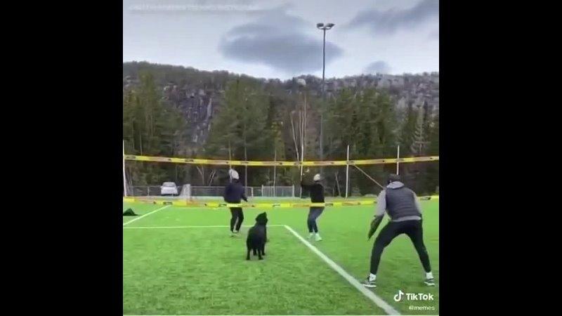 Пёс волейболист