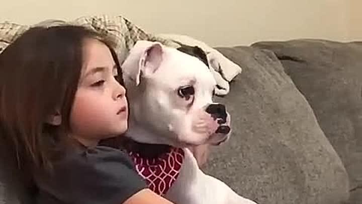 Видео от Собака - Друг человека | Собаки