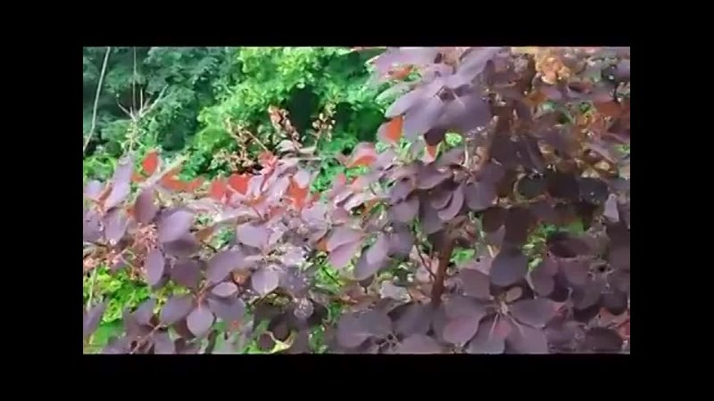 Видео от Топкановская сельская библиотека филиал МБУК