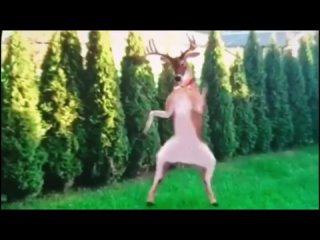 толик больших успехов олень танцует 33)ЖЖЖ