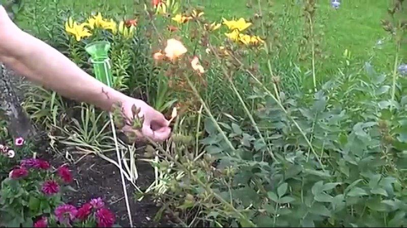 Видео от Цветущий Сад Идунн