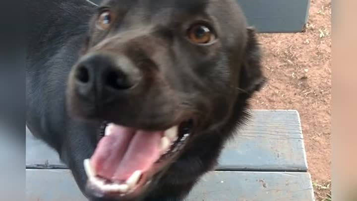 Собака тащила одеяло на улицу. Когда хозяйка увидела, зачем пёс это делает, еле сдержала слёзы