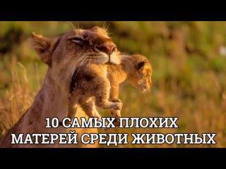10 САМЫХ ПЛОХИХ МАТЕРЕЙ СРЕДИ ЖИВОТНЫХ.mp4