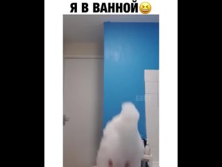 Почему так долго в ванной? Я: