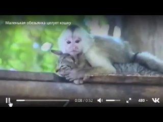 Video by Школа Выживания (Как защититься от мошенников)