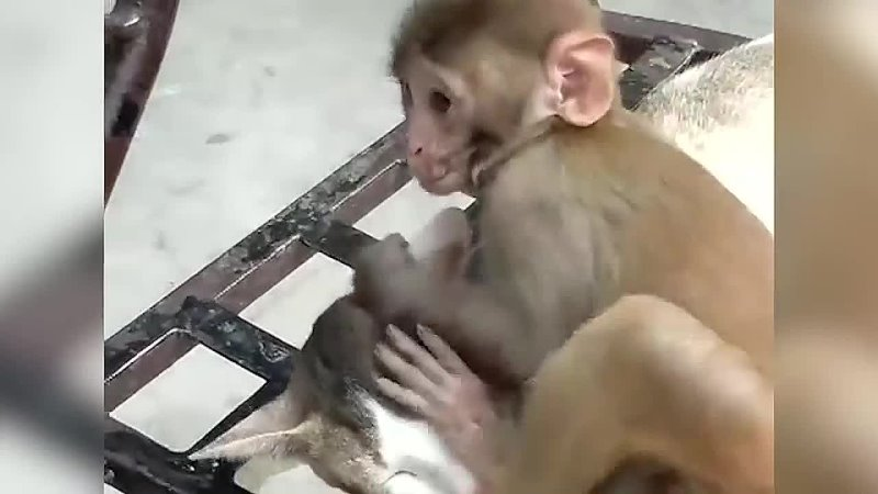 Cat and Monkey Playing Very Unlikely Friends Poke My Heart