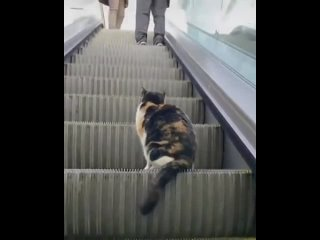 Кот который живет в торговом центре))