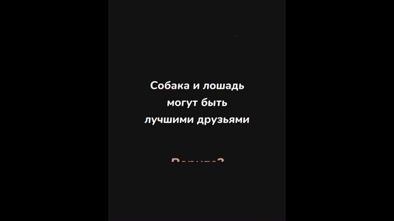 Лучшие друзья в Пермском крае
