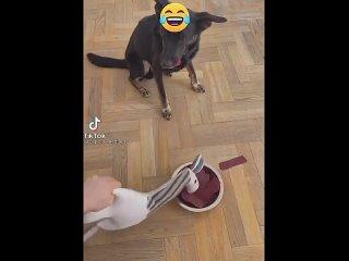 Собака тоже бросает пищу