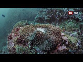 Дикий мир океана 4 серия. Таиланд / Ocean Wild (2020)