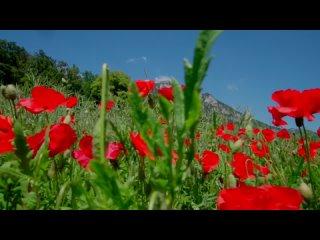 Vera Golikovatan video