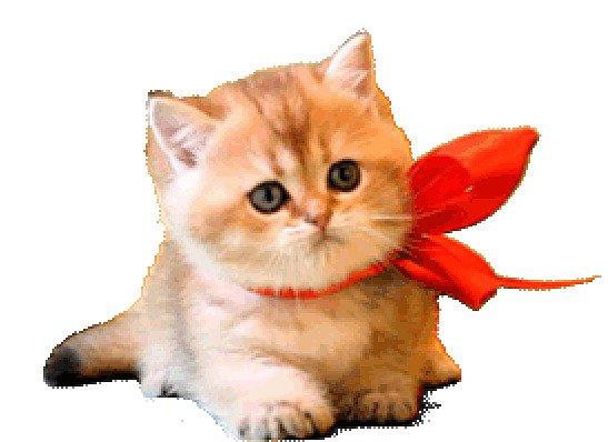 Картинки движущихся котиков