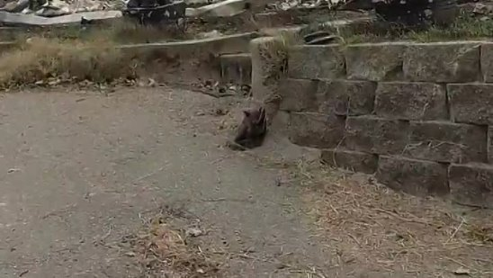 This guy found a tiny kitten in the rubble
