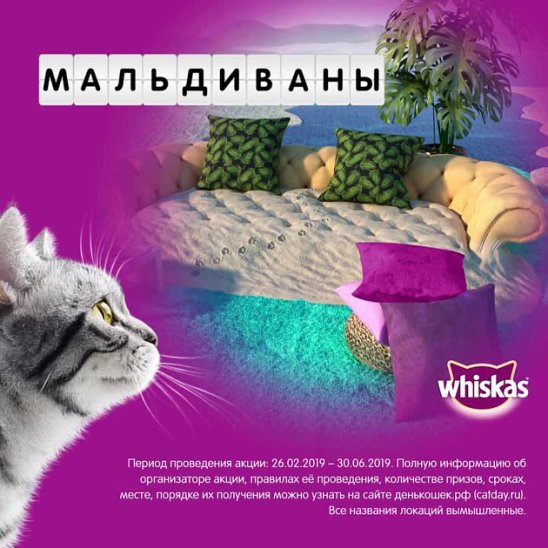 WHS_CatDay 2019_Promo post (image) video format_Maldivany_09_1080x1080