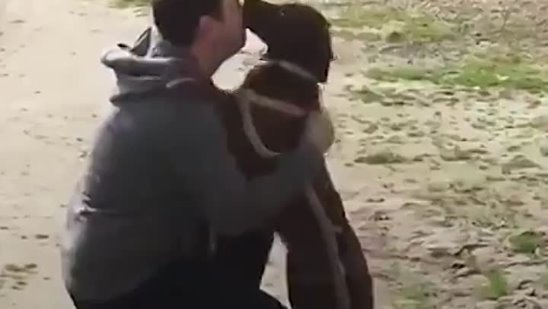 At first this dog didn't realize that this guy is her long-last dad but once she does, she goes WILD 💕