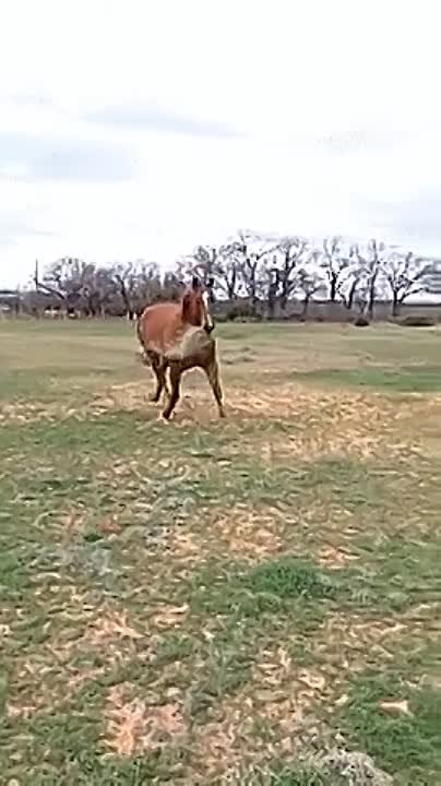 Horse-shares-breakfast-to-its-friend.mp4