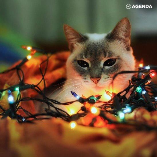 Домашние питомцы встречают Новый год