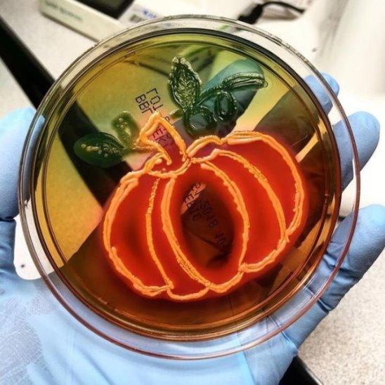 Рисунки бактериями