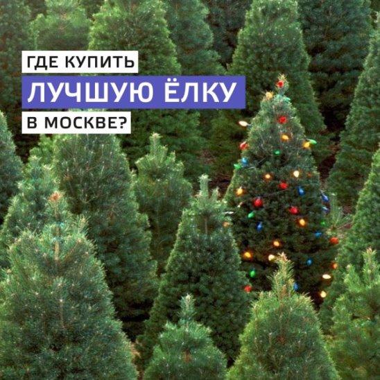 Где купить лучшую ёлку в Москве?