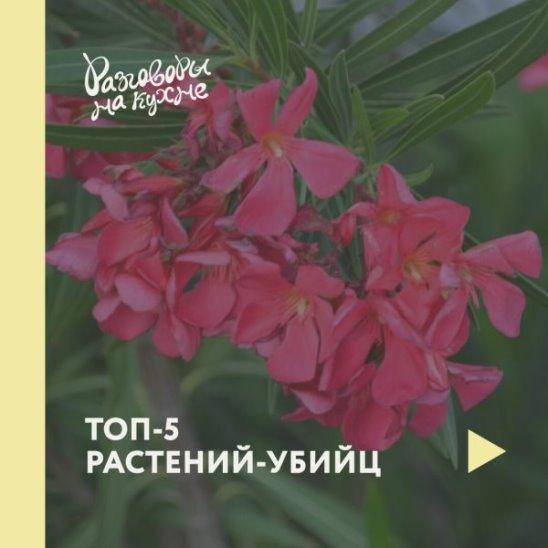 Топ-5 растений-убийц