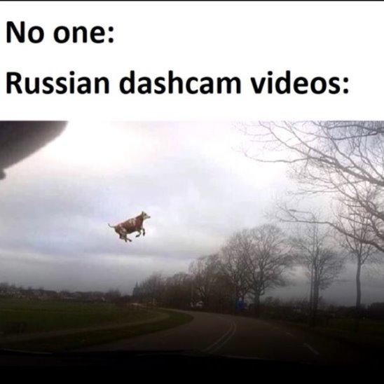 Видео с авторегистраторов стало мемом