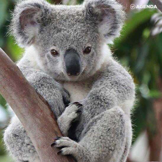 Как дроны ведут подсчет коал?