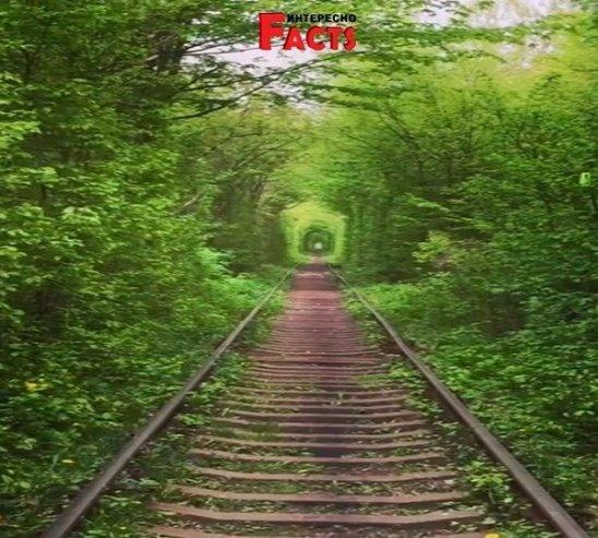 Тоннель любви - одно из самых романтических мест Украины.