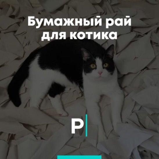 Бумажный рай для котика