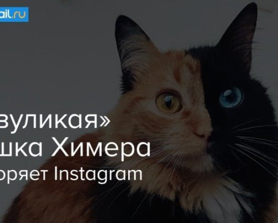 """""""Двуликая"""" кошка Химера покоряет Instagram"""