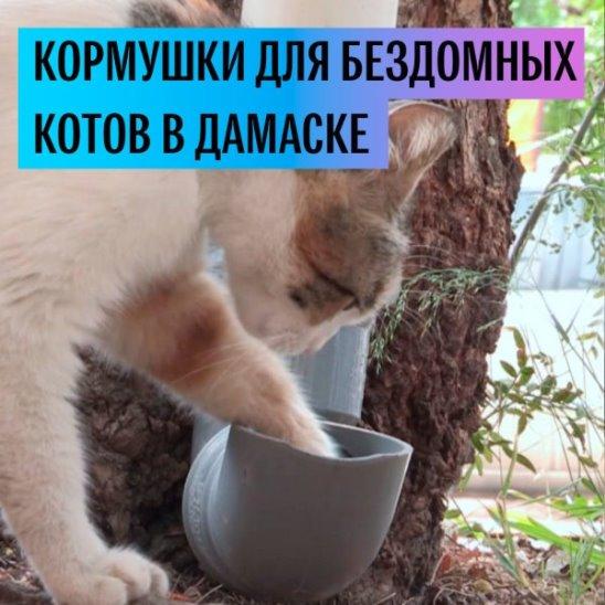 Кормушки для бездомных кошек в Дамаске
