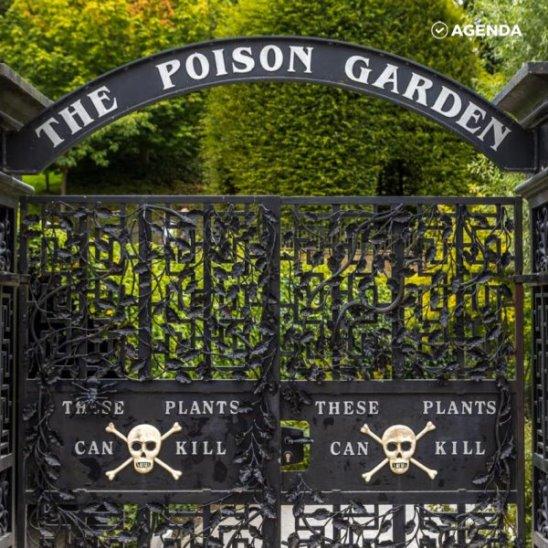 Есть в графском парке черный сад, где цветут растения-убийцы