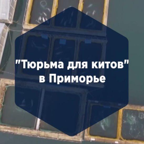 """""""Тюрьма для китов"""" в Приморье"""