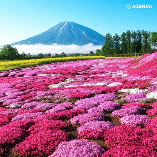 Лиловый парк Хигасимокото Шибазакура