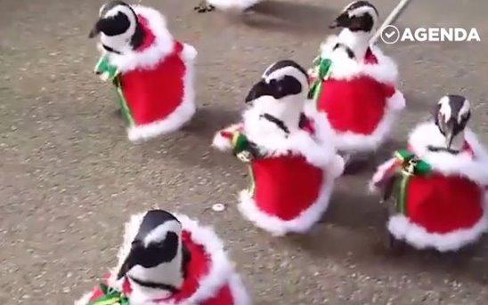Пингвины готовы к Новому Году