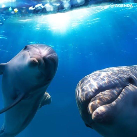 Дельфины под кайфом